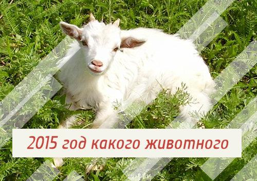 2015 год какого животного