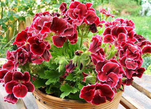 Цветы способны улучшить энергетику в доме