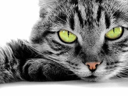 Гороскоп — Кот