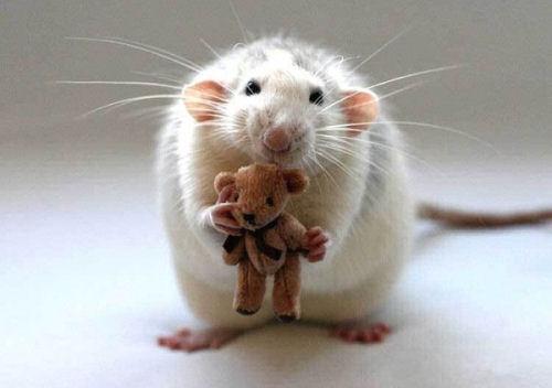 Гороскоп — Крыса