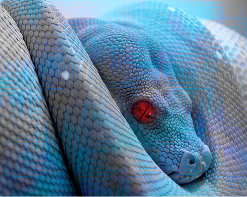 Гороскоп — Змея