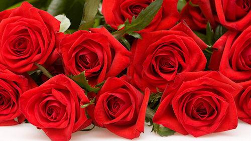 Розы. Почему не образуются бутоны