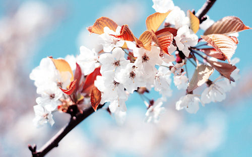 Салон цветов — украшаем жизнь