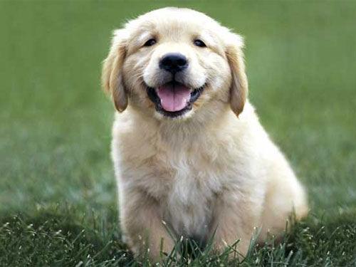 Как кормить и ухаживать за щенком