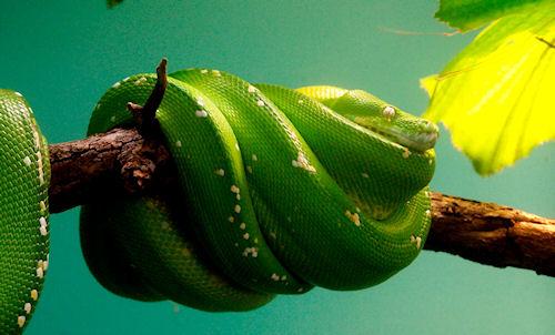 Встречаем Новый 2013 год змеи, вспоминая маскарадное детство либо в...
